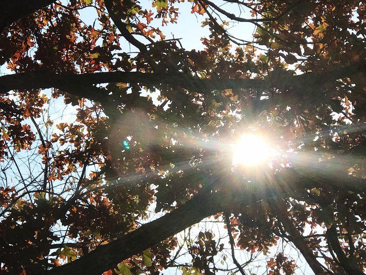 Sun Trees Nature Sunbeam Through The Trees