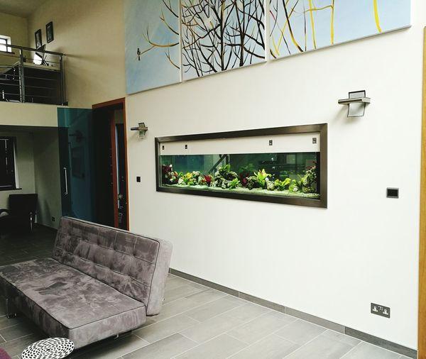 Tropical fish tank, Interior Interior Inspiration Fishtank Tropical Fish Fishkeeping Fishkeepers Aquarium Life Aquarium Aquarium Photography Aquascape Aquariumfish