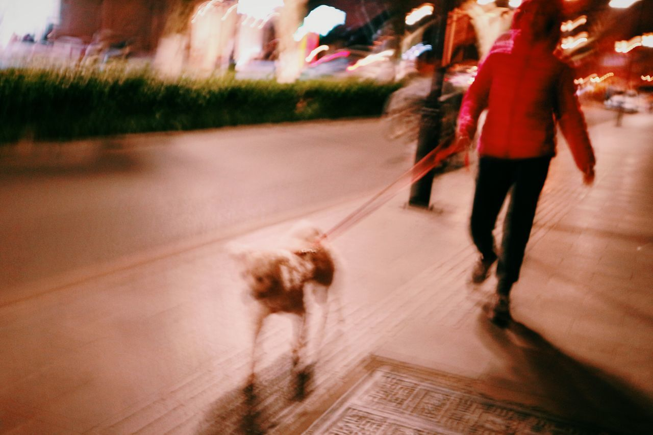 blurred motion, road, motion, walking, street, real people, rear view, outdoors, speed, dog, day, full length, low section, one person, city, men, mammal, people, adult, adults only