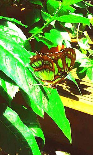 Taking Photos Beautiful Nature Betterfly Awesome_nature_shots Enjoying Life Colorful Lovelovelove Gourgeous