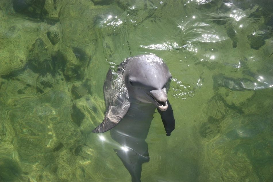 Beautiful stock photos of dolphins, Animal Head, Animal Themes, Animals In The Wild, Aquatic Mammal