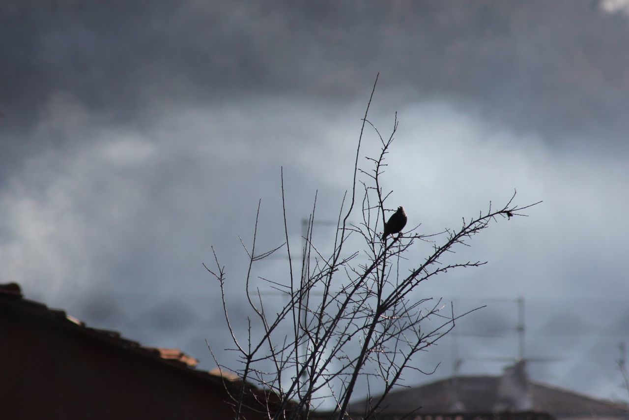 bird, one animal, animal themes, animals in the wild, cloud - sky, sky, animal wildlife, perching, day, no people, outdoors, nature