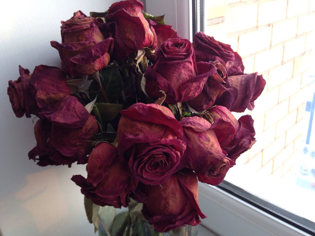 Roses Flower Died Broken Love Lovestory Red Roses