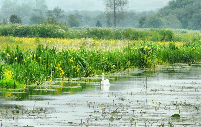 Somerset Levels Uk Nature Photography Wetland Summer Memories... Edit Photo
