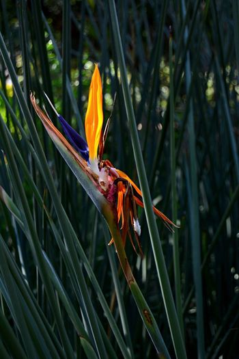 Wandering about in Company's Garden Flower Fragility Growth Nature Bird Of Paradise - Plant Orange Color Petal Outdoors Close-up Plant Green Color Greenery Beauty Freshness No People Day