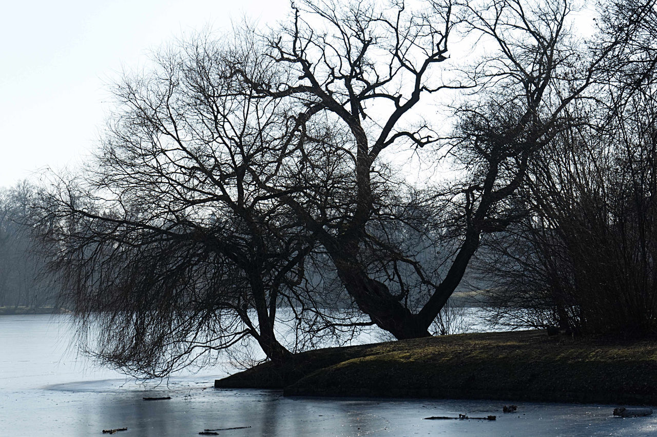 Bare Tree Beauty In Nature Cold Temperature Day Ice Lake Landscape Nature No People Outdoors Sky Tree Water Winter