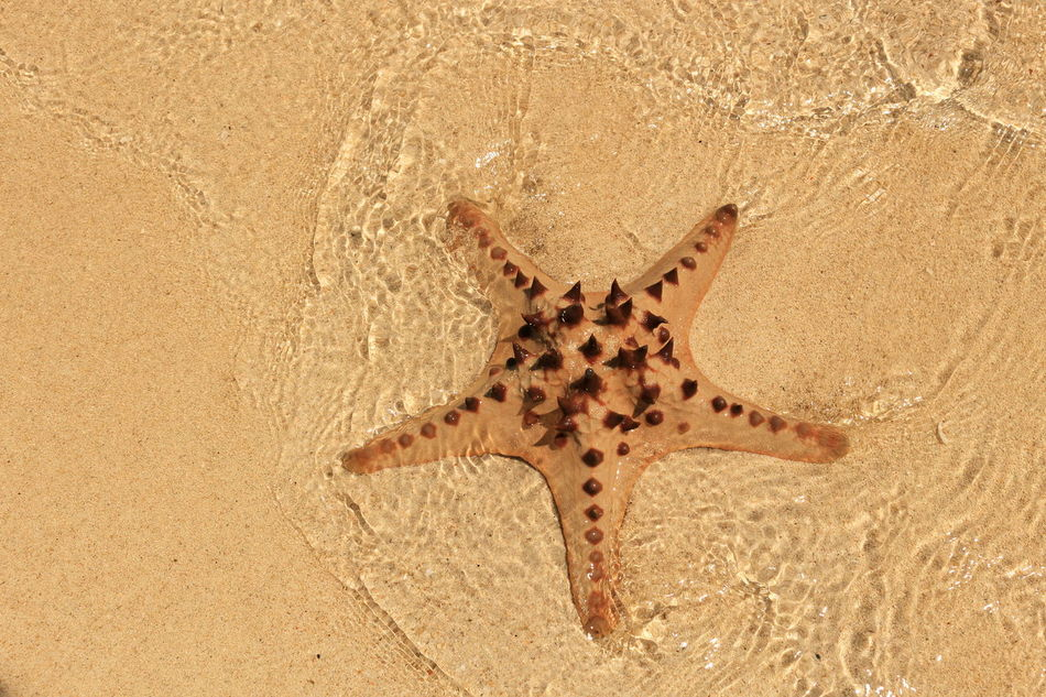 Beautiful stock photos of starfish, Brown, Horizontal Image, Pastel, art and craft