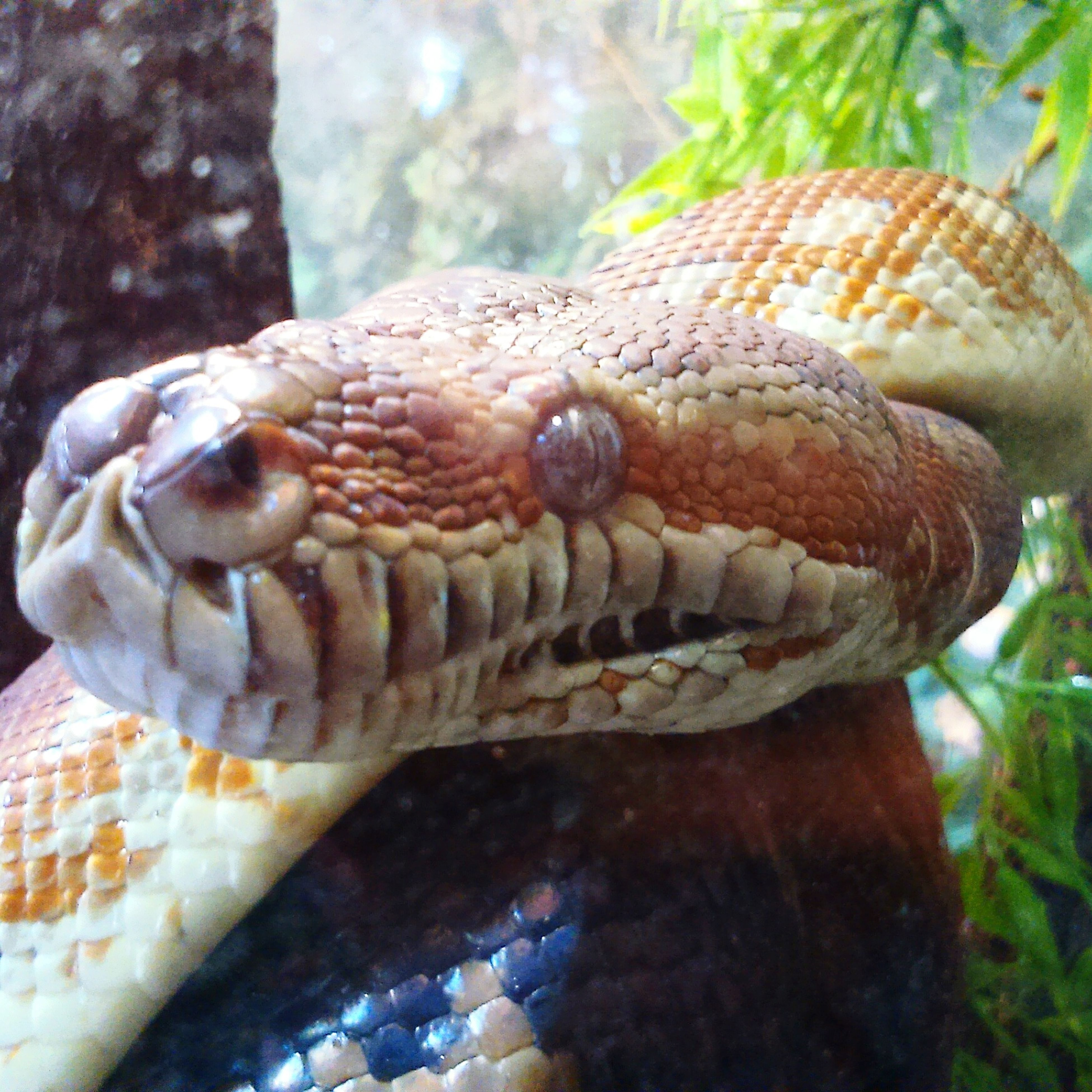 one animal, animal themes, reptile, animals in the wild, close-up, animal wildlife, nature, no people, day, outdoors, animal scale