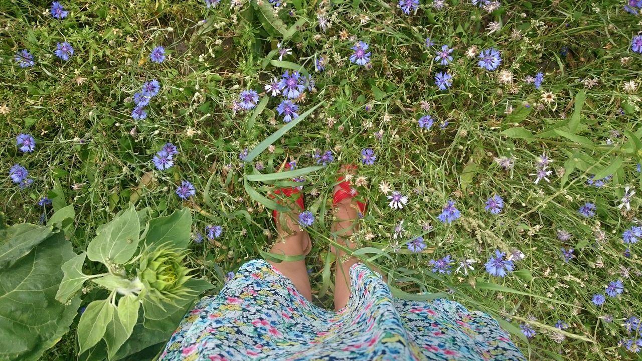 Standing In a Wildflower Meadow Showcase July