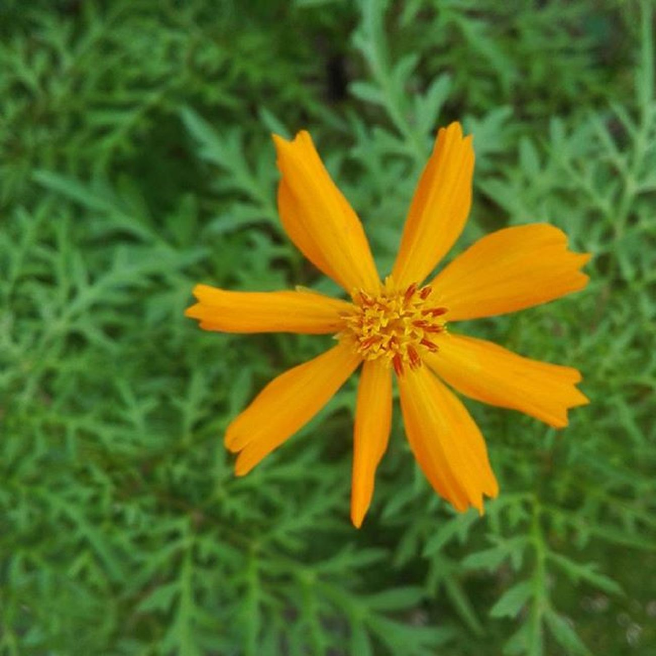 WEEK 1 Floral Photography (Macro) Flowers Macro Closedup Nature