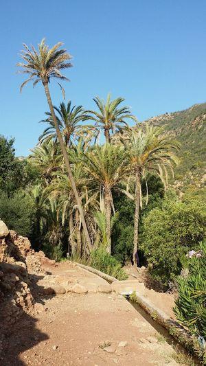 Oasis No Filter No Effects View Landscape Palmiers Trip Trekking Tripping Beautiful Nature Beautiful Nature Water A Bird's Eye View Seguia