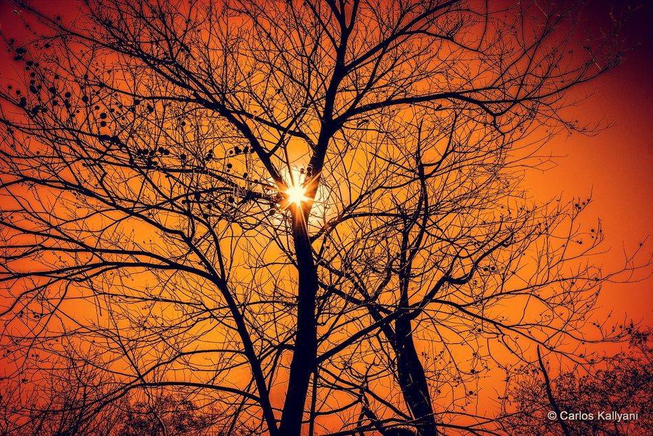 Poente no Cerrado Sunset Nature Tree Sun Beauty In Nature Orange Color Sunlight Silhouette Sky No People Tranquility Day Céu Fotografia Brasília - Brazil Fotoartistica Fotoart Photography Foto Photo Fotoartegram Brasília Fotoarte Brasília Minha♥ Fotografia Photo Gavião