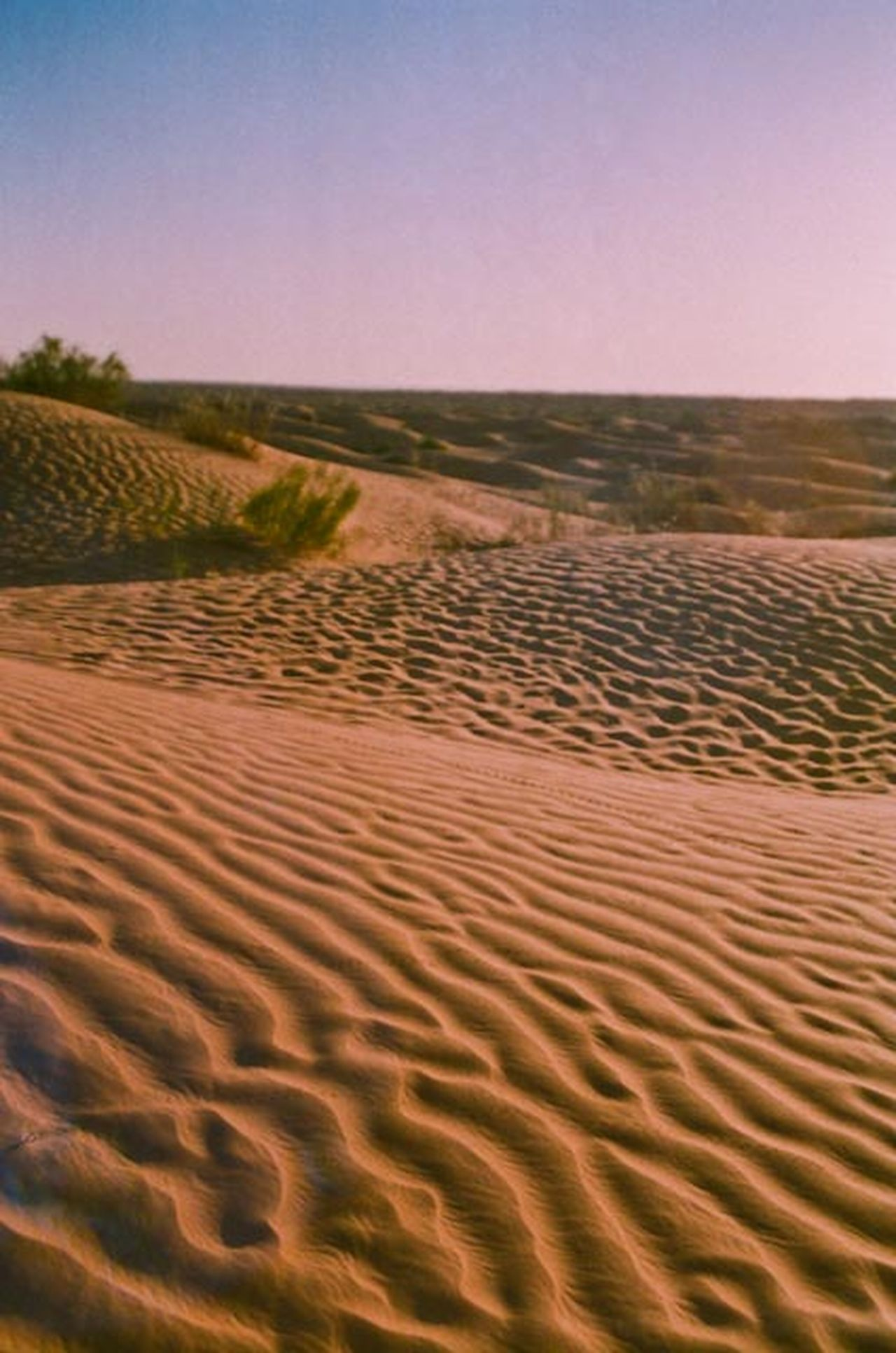 Arid Climate Desert No People Relief Sand Sand Dune Sand Waves Sky