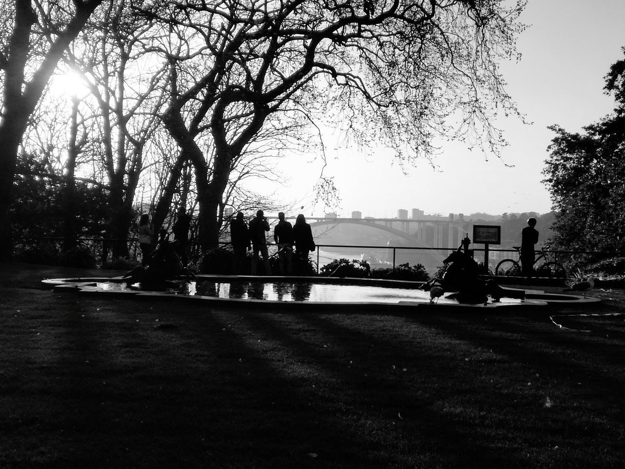 Tree Sky Sunset Bridge - Man Made Structure Urban Gardening Bnw_captures Minimalism Picture In A Frame Porto, Portugal Tranquility FriendshipSilhouette Photography Backlight And Shadows Silhouettes Of People