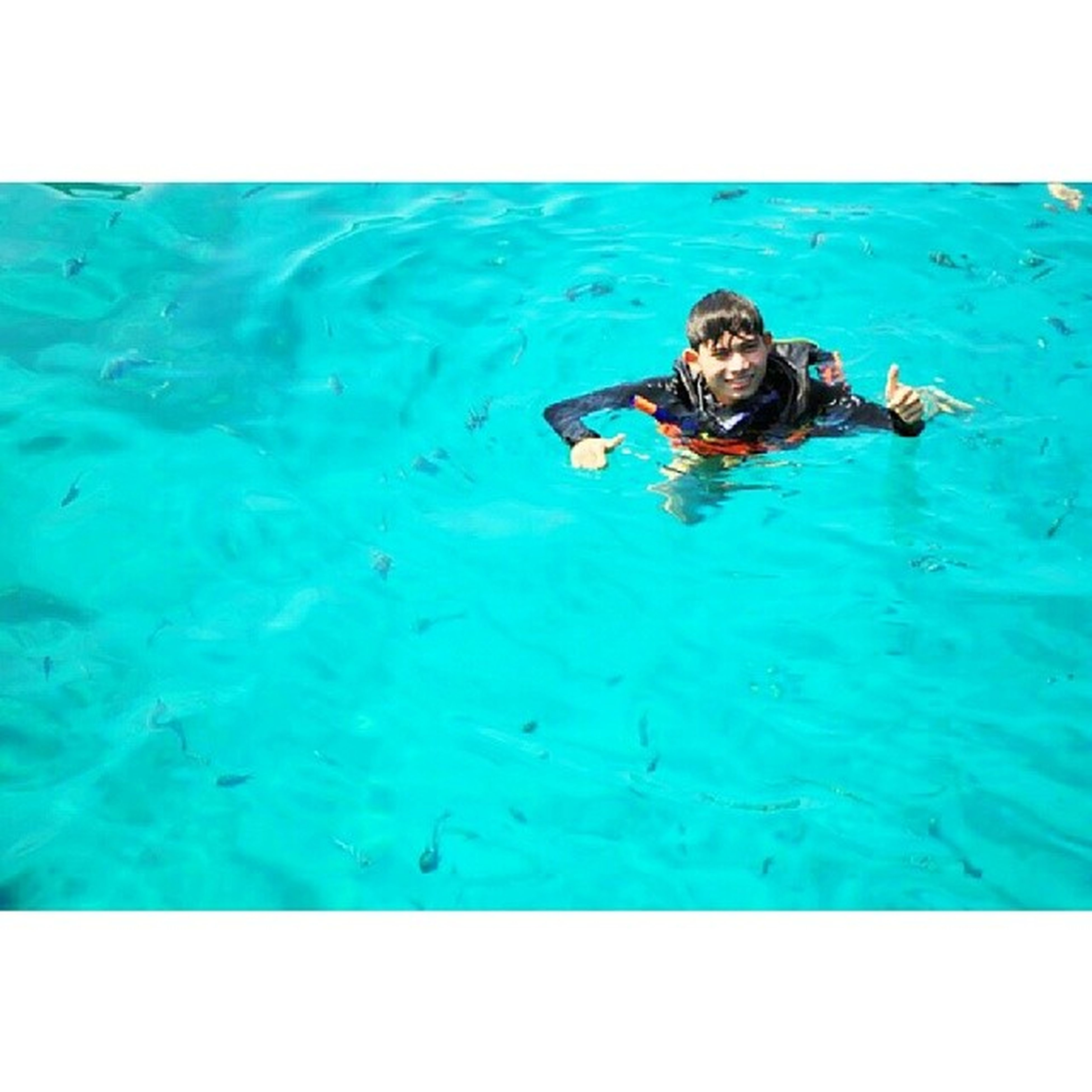 water, blue, animal themes, transfer print, swimming, one animal, sea, auto post production filter, full length, high angle view, wildlife, turquoise colored, swimming pool, animals in the wild, sitting, day, waterfront, nature, underwater, one person