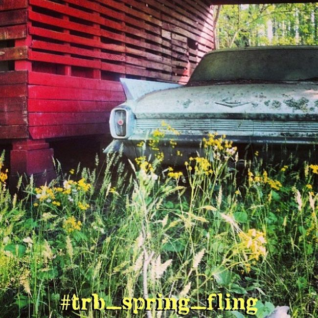 Trailblazers! This weeks challenge is all about Spring!! #trb_spring_fling Spring is here and its time to celebrate the season.. Spring flowers, rural landscapes, tree blossoms , baby livestock, portraits etc. All things Spring!! Enter your pics (new an Trailblazers_rurex Trb_spring_fling
