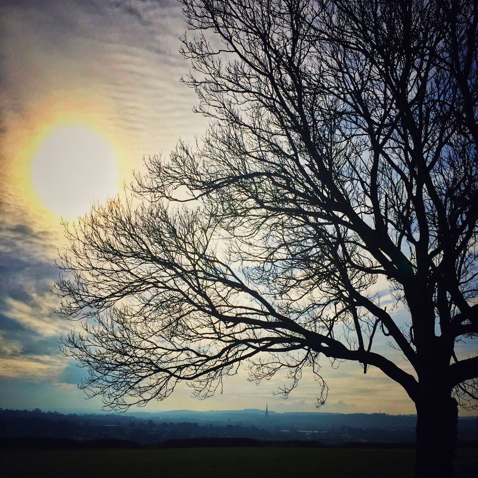 Old Sarum Salisbury Cathedral  Misty Morning Spire  Hill Fort Early Mist Early Dog Walk. Bare Tree Sky Tree Branch Nature Silhouette Outdoors No People Tranquility Tranquil Scene Beauty In Nature Cloud - Sky Scenics Low Angle View Day Willow Tree