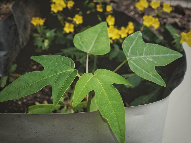 EyeEm Nature Collection EyeEm Best Shots EyeEm Best Edits EyeEm Gallery Eyeem Plants Eyemphotography EyeEm Nature Lover Small Plant EyeEm Leaf Edited Photo