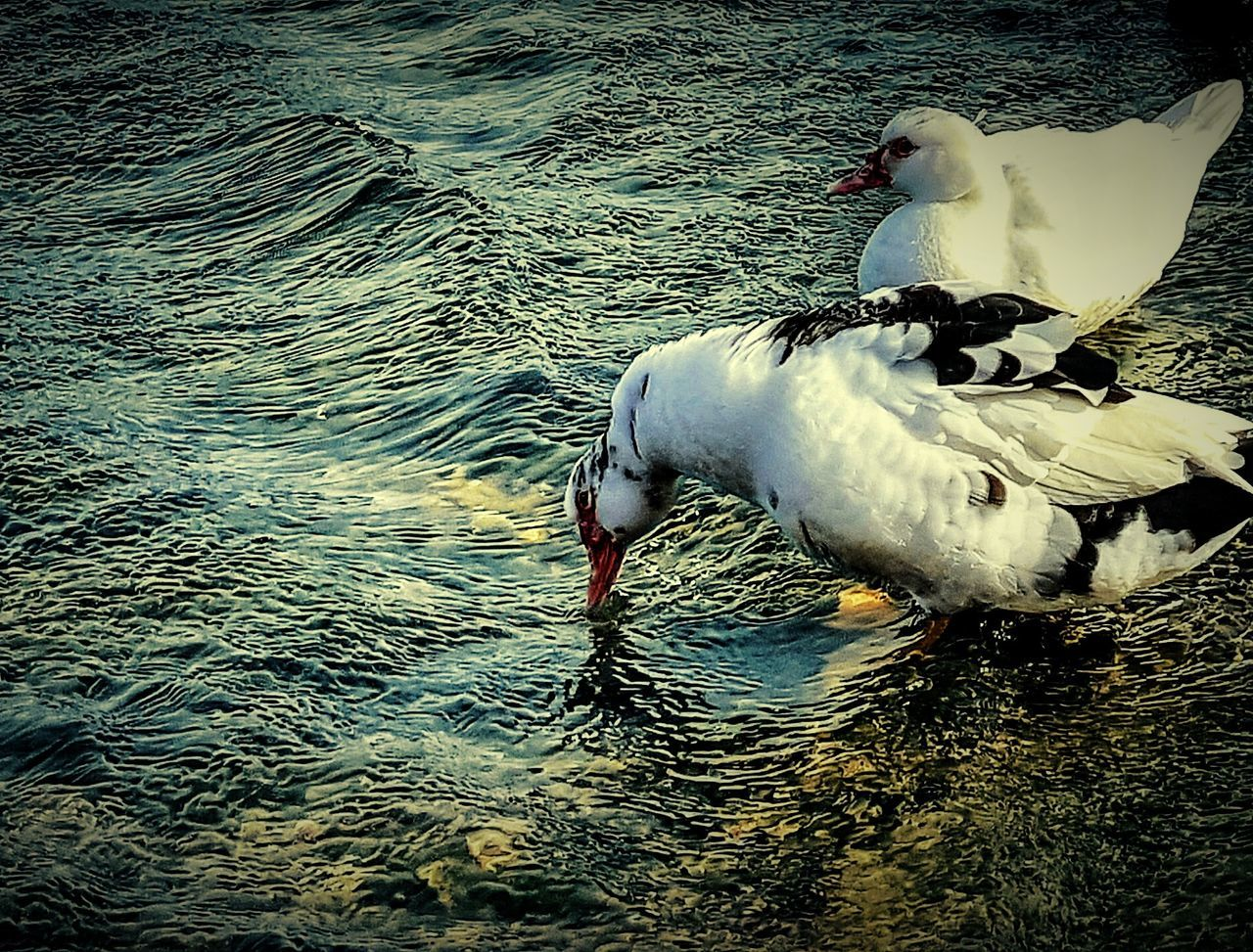 Bird Animals In The Wild Animal Themes Water Lake Animal Wildlife High Angle View No People One Animal Outdoors Day Nature Water Bird Lovephotography  Tranquility Españoles Y Sus Fotos Pets Beauty Love To Take Photos ❤ Personal Perspective Scenics Beauty In Nature Innocence EyeEmBestPics Color Of Life