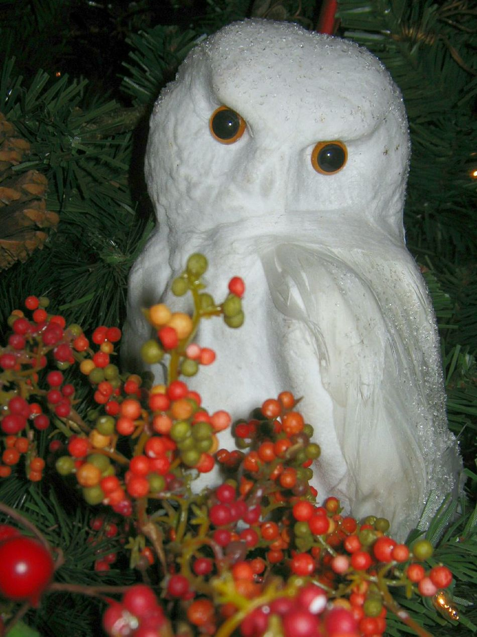 Merry Christmas Everyone! Owl see ya later! White Color Christmas Christmas Decoration Close-up Christmas Around The World Christmas Tradition Christmas Spirit Christmas 2016 Merry Christmas Everyone Christmas Tree Christmas Ornament