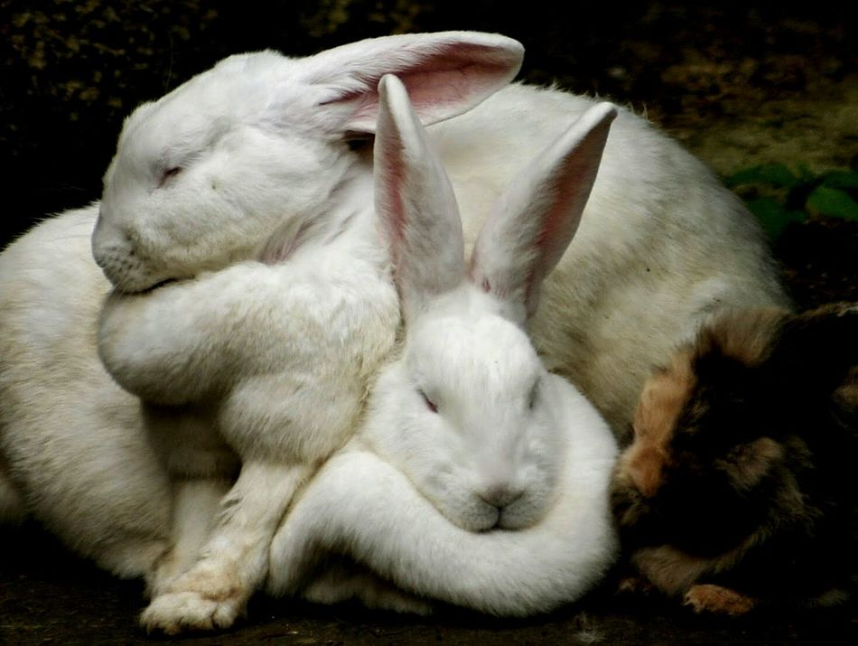 Beautiful stock photos of easter bunny, Animal Themes, Animal Wildlife, Animals In The Wild, Brown