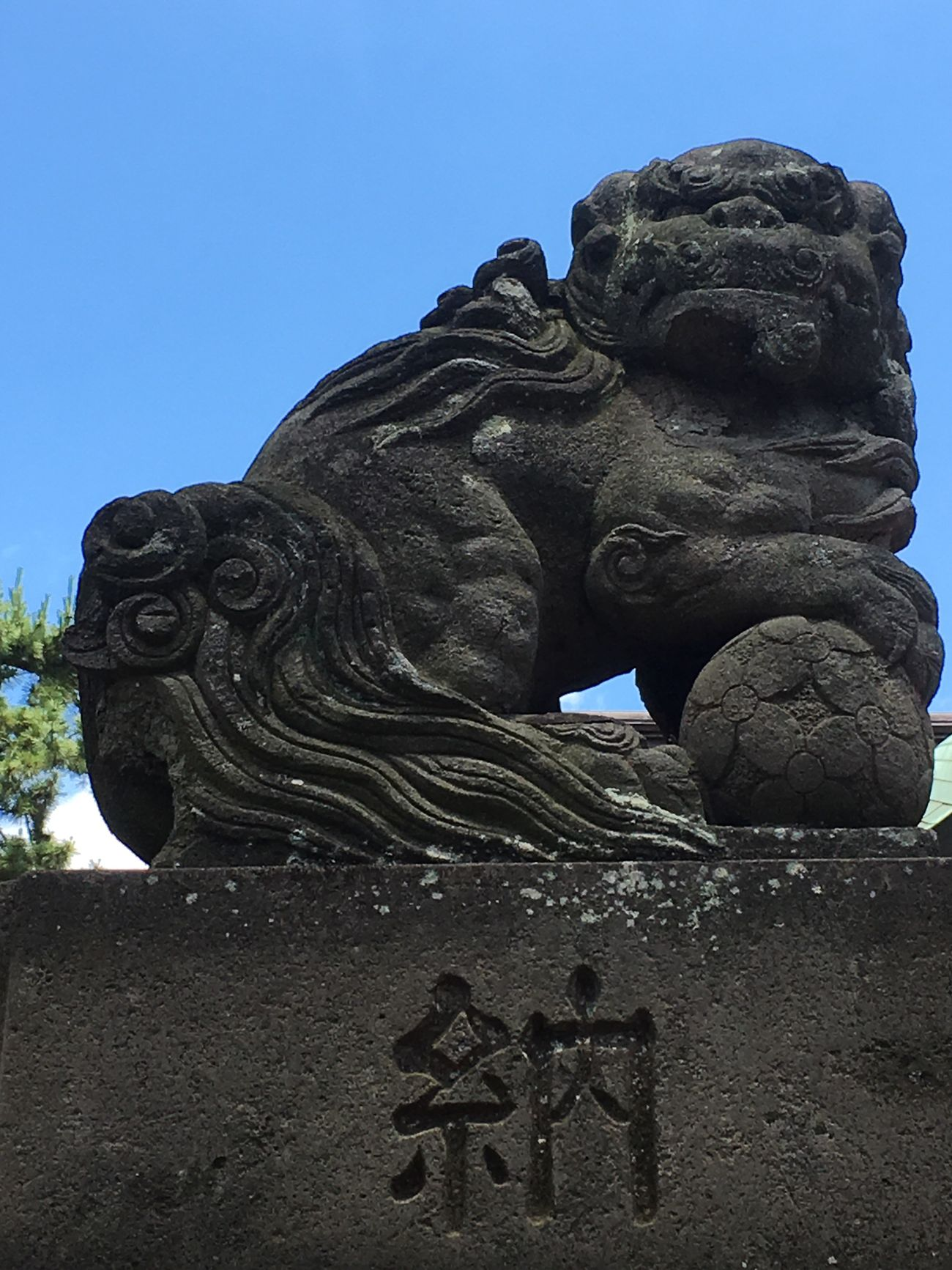 No People Shinto Shinto Shrine Nature Grounds Guardian Lion-dog At Shinto Shrine Shiny Day Early Summer June 2017 Tokyo Tokyo,Japan Underthesun Solemnity 東京 神社 境内 初夏 太陽の下 狛犬