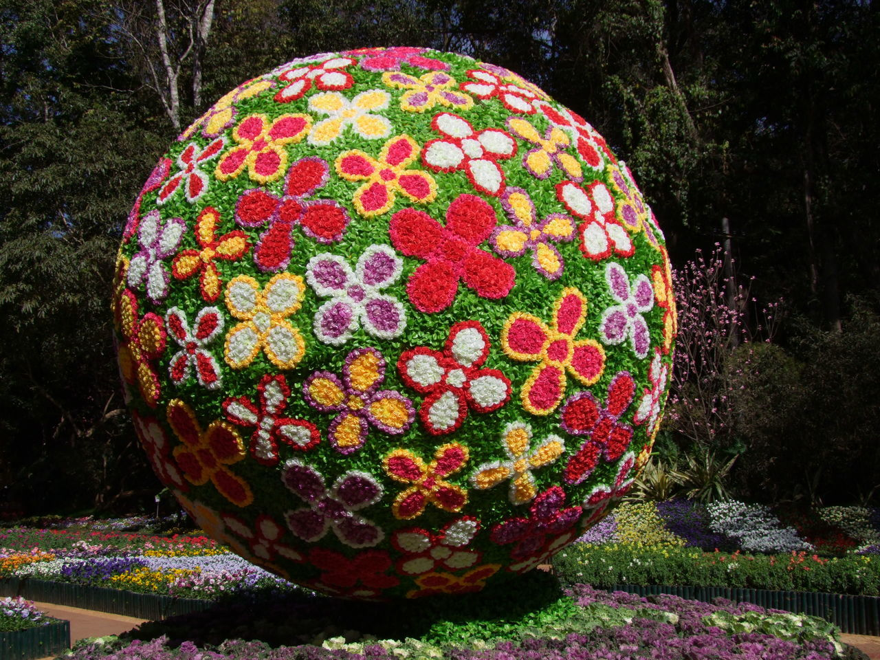 Ball of Flowers at National Kandawygi Gardens Ball Ball Of Flowers Beauty In Nature Composition Dark Background Flower Display Flower Motifs Flower Patterns Full Frame Fun Multicoloured Multicoloured Flowers Myanmar National Garden National Kandawygi Gardens No People Outdoor Photography Pyin Oo Lwin Sunlight And Shade Tourism Tourist Attraction  Tourist Destination Travel Destination Unusual