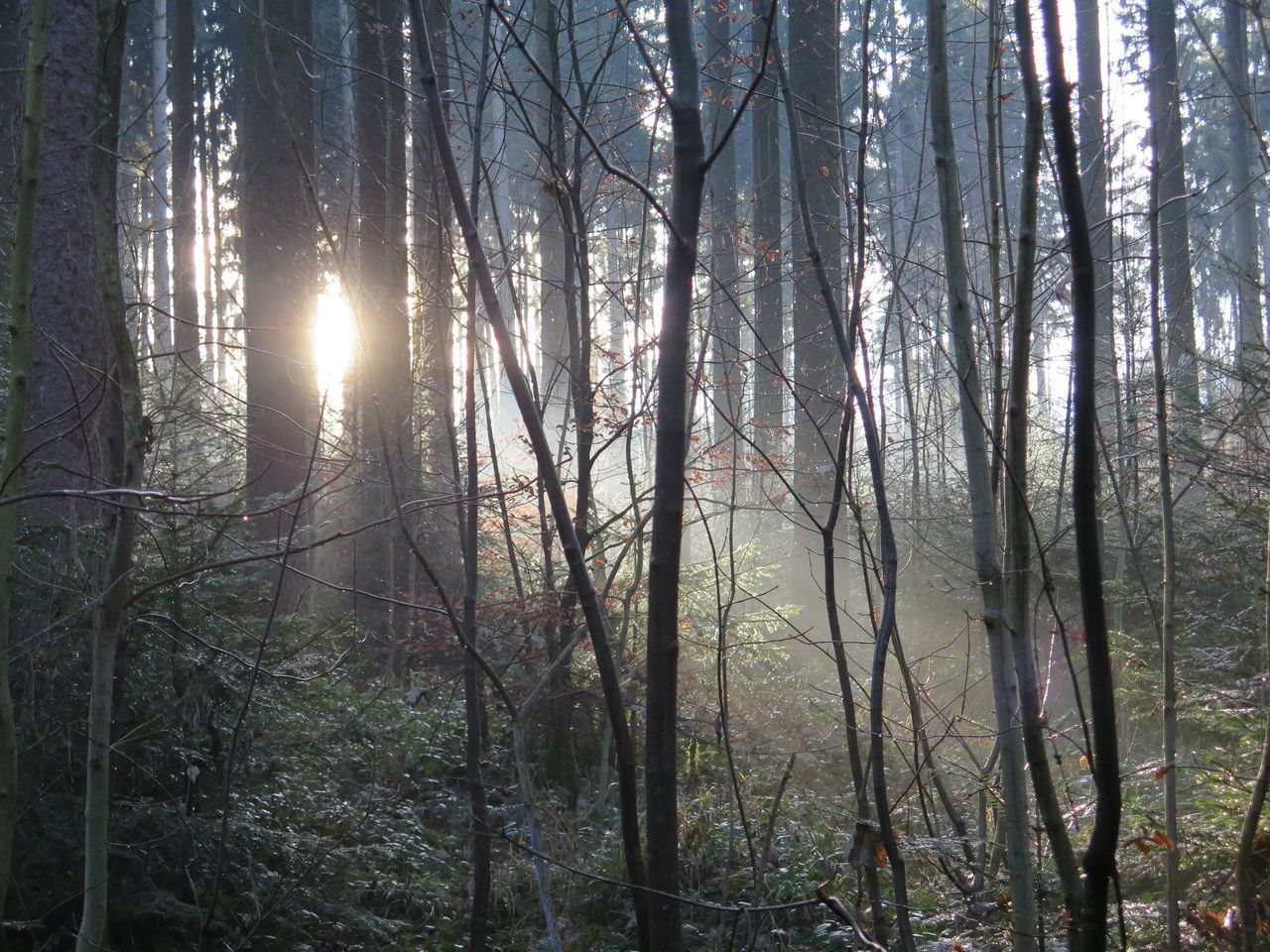Naturelover Forest Photography Cold Days Nature Photography Sunrais Trees Trees And Nature