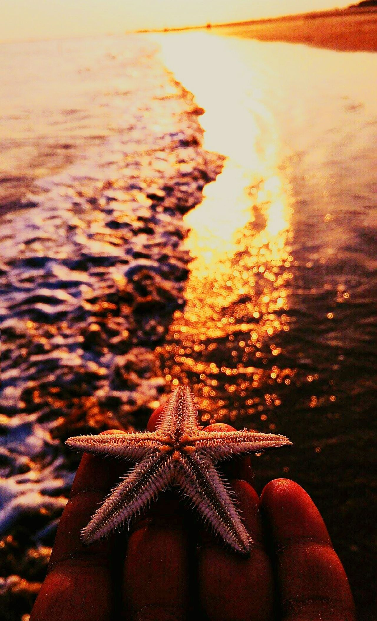 Starfish  Starfish At Beach Water Sea Beach Sunset Sunlight Nature Animal Themes Sand Sea Life Beauty In Nature No People Close-up Outdoors Animals In The Wild Underwater Day UnderSea