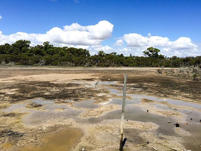 Wetland Drought Outdoor Photography Swamp Wetland Market Garden Swamp Drought Dried Conservation Reserve Nature Trees Western Australia Spearwood Peaceful Place Tranquil Scene Desolate Dried Wetland Clouds And Sky Dried Up Lake Quiet Blue Sky Cumulus Puddles Herons Ibis