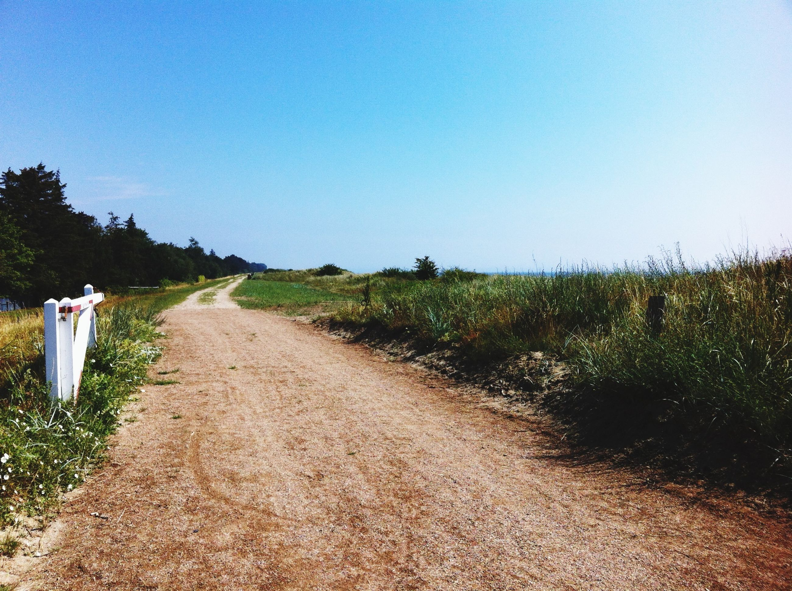 clear sky, copy space, grass, the way forward, tranquility, tranquil scene, landscape, field, blue, dirt road, nature, tree, beauty in nature, growth, scenics, diminishing perspective, road, plant, non-urban scene, grassy