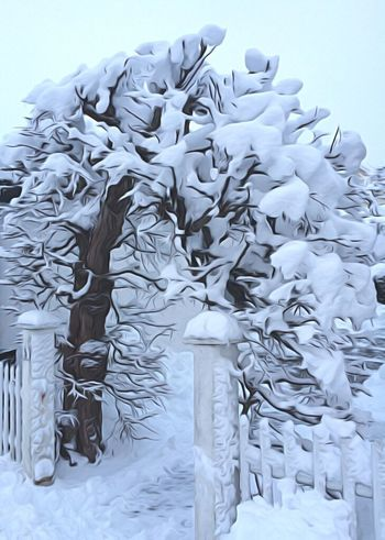 Fairytale  Check This Out Enjoy The View No People Entrance Gate Entrance To Magic Land Magic Moments Magical Trees Magic Forest Fantasy Photography Fantasy Edits Fantasy World Magic Places Magic Entrance Neighbours First Eyeem Photo First Snow FirstEyeEmPic Snow ❄ Snow Covered Snowy Trees
