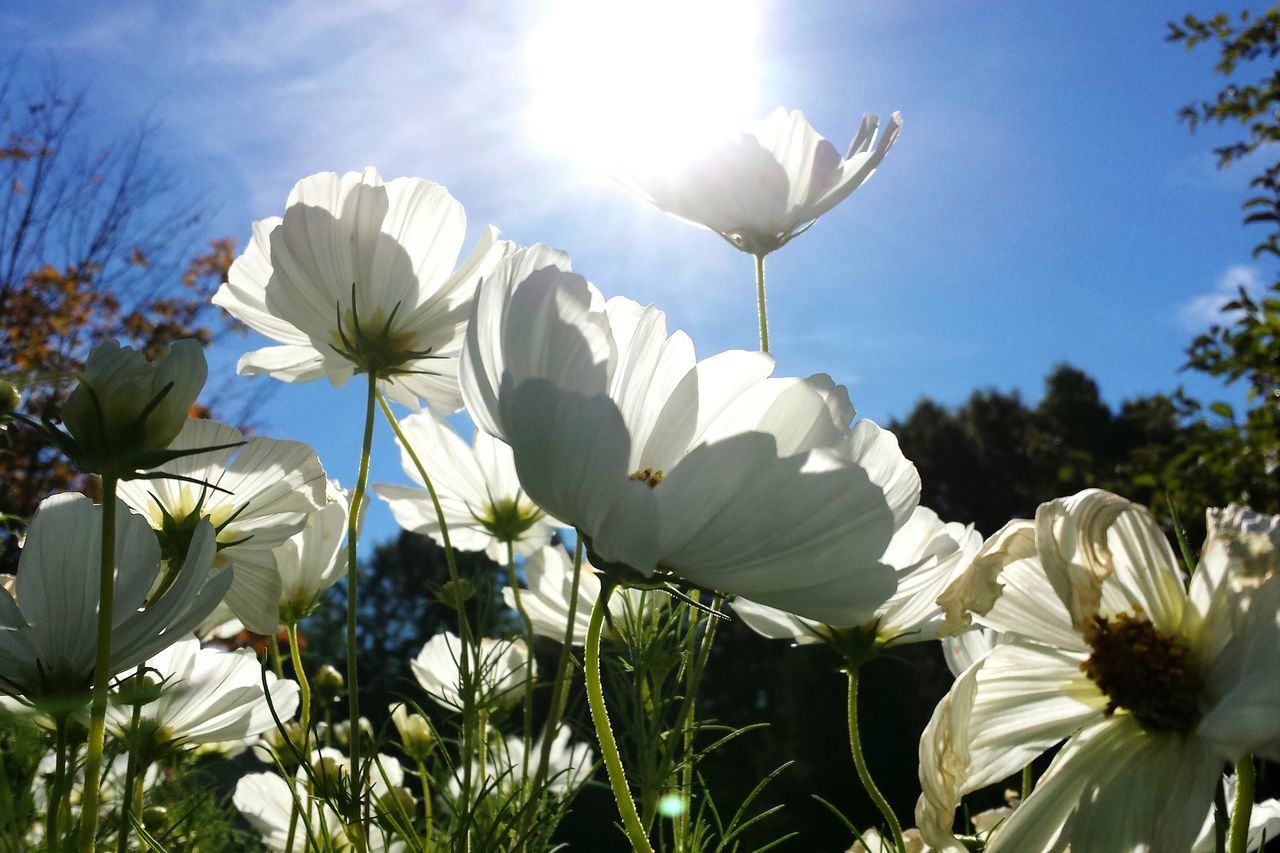 White Flowers Blooming Against Bright Sun