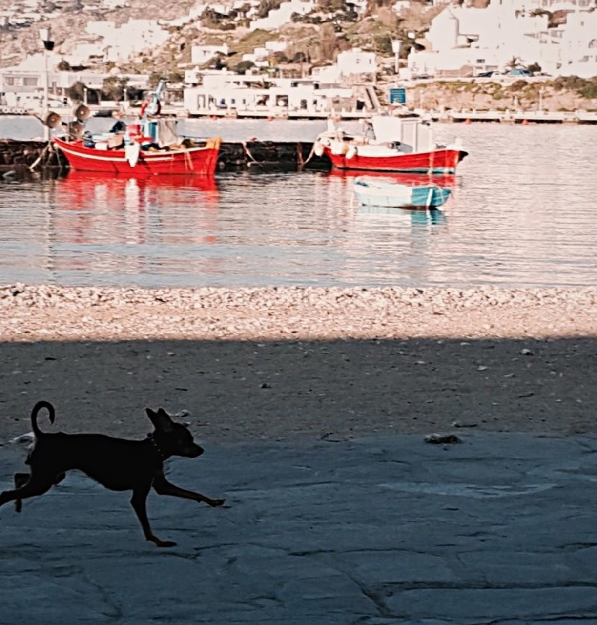pets, animal themes, domestic animals, water, dog, sea, one animal, outdoors, no people, day, mammal