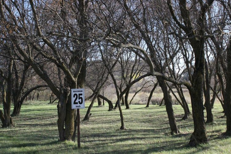 Signs Sign, Sign, Everywhere A Sign Tree Signs Signage Needless To Say... ??? Stupid Signs Dead End Trees