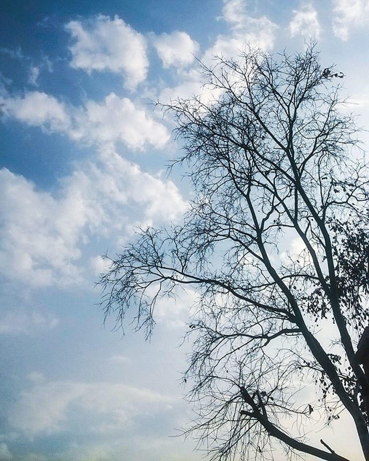 When cloud grows on the tree. Minimaloftheday Naturelovers Minimal_perfection Picoftheday Mobilemag Jaipur Beautiful Minimalism Seasons Instaspring Instagood Minimalove Color Ig_minimalistic Bestoftheday FollowUS Followme Followuser Minimalhunter Tree Pretty Love Photooftheday Abstractartist Killerminimal followforfollow iiframe cloudporn cloudchaser abstractart