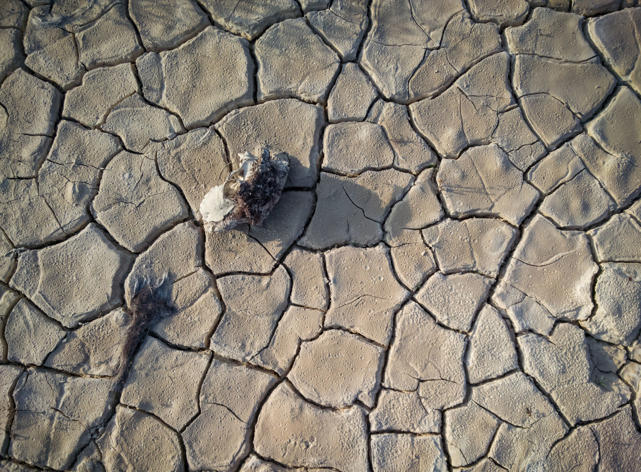 cracked, arid climate, drought, one animal, day, sand, nature, extreme terrain, environmental issues, desert, high angle view, animal themes, outdoors, land, animal wildlife, no people, animals in the wild, environment, textured, camouflage, close-up, mammal