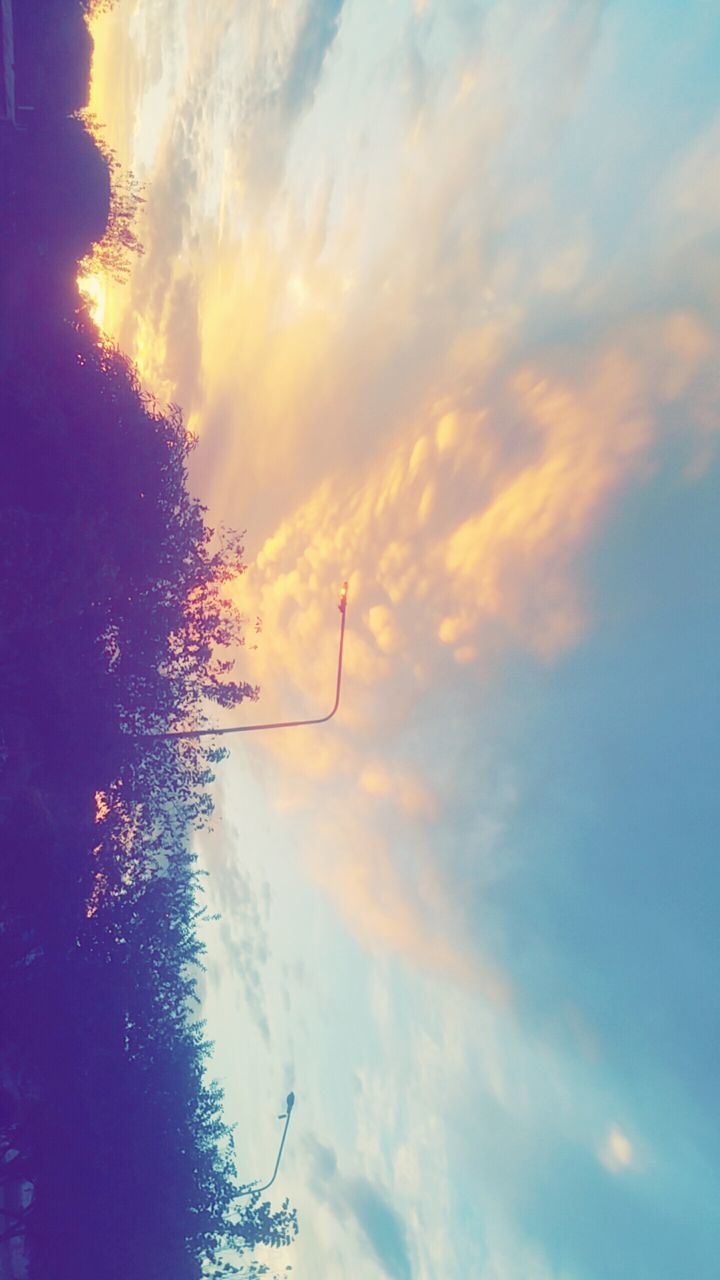 sky, sunset, cloud - sky, nature, beauty in nature, outdoors, no people, scenics, low angle view, day, tree, close-up