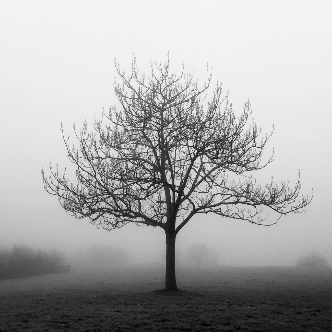 Alone in fog Bnw Trees Nature Nature_collection