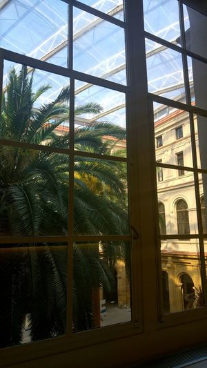 Sunlight Window Windows Deusto Architecture Palm Tree Palm Trees Palm Tree Built Structure