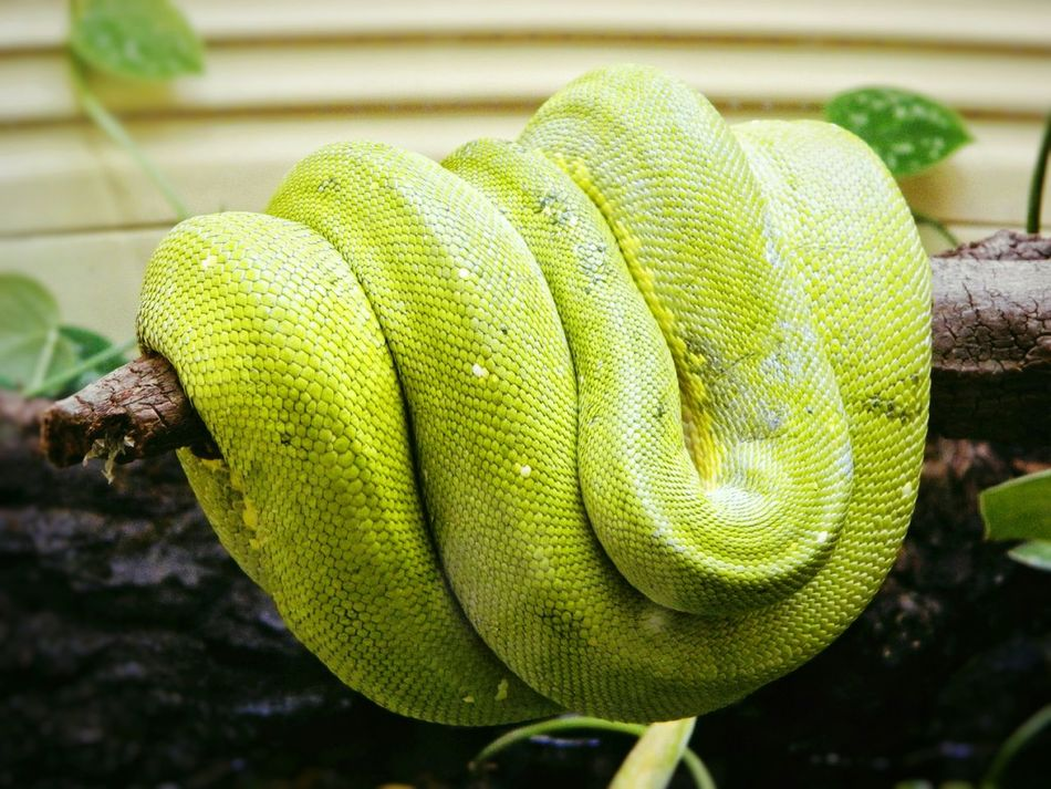 Beautiful stock photos of snakes,  D. C., Animal Themes, Animal Wildlife, Animals In The Wild