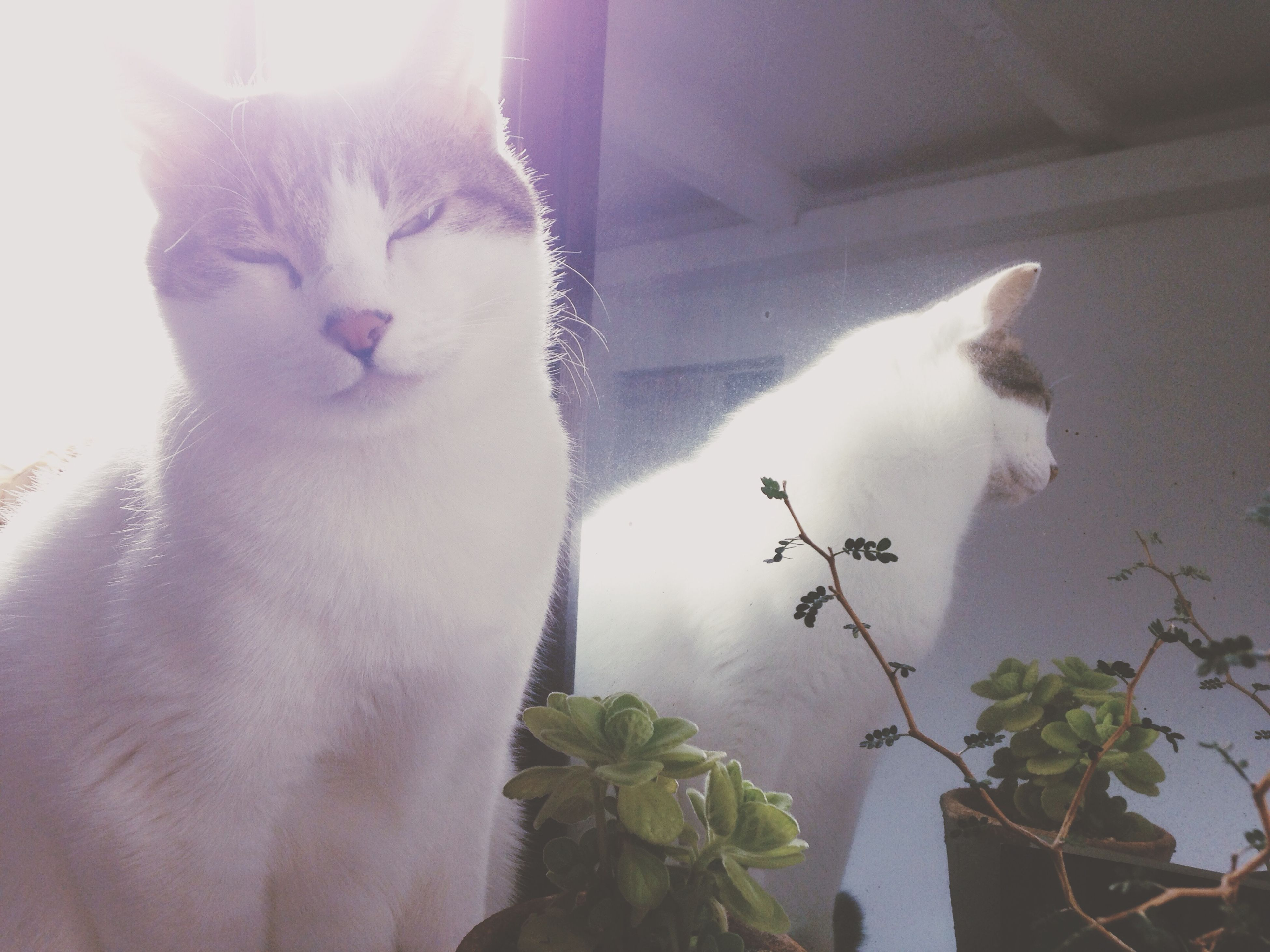 domestic animals, pets, domestic cat, one animal, animal themes, mammal, cat, indoors, feline, home interior, close-up, relaxation, plant, flower, eyes closed, whisker, looking away, portrait, home, nature