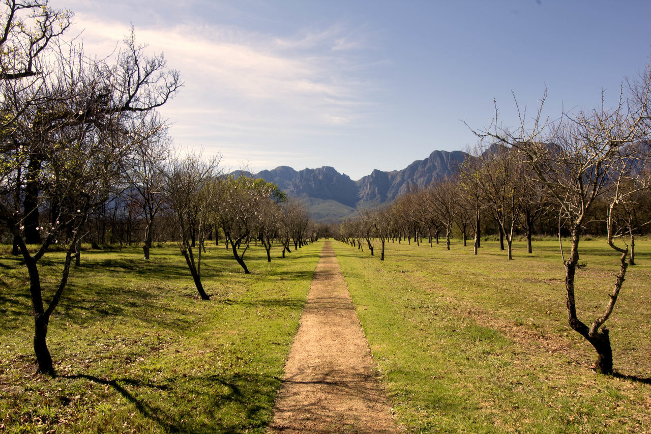 Vineyards at Vergelegen Beauty In Nature Canon Day Exploring EyeEmNewHere Field Freshness Landscape Landscape_Collection Mountain Mountains Nature No People Outdoors Scenics Sky Symmetry Tranquil Scene Tranquility Tree Vineyard Wine Farm