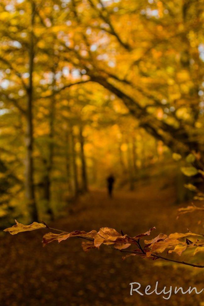 Everyday Lives Walking Around Beautiful Nature Enjoying Life