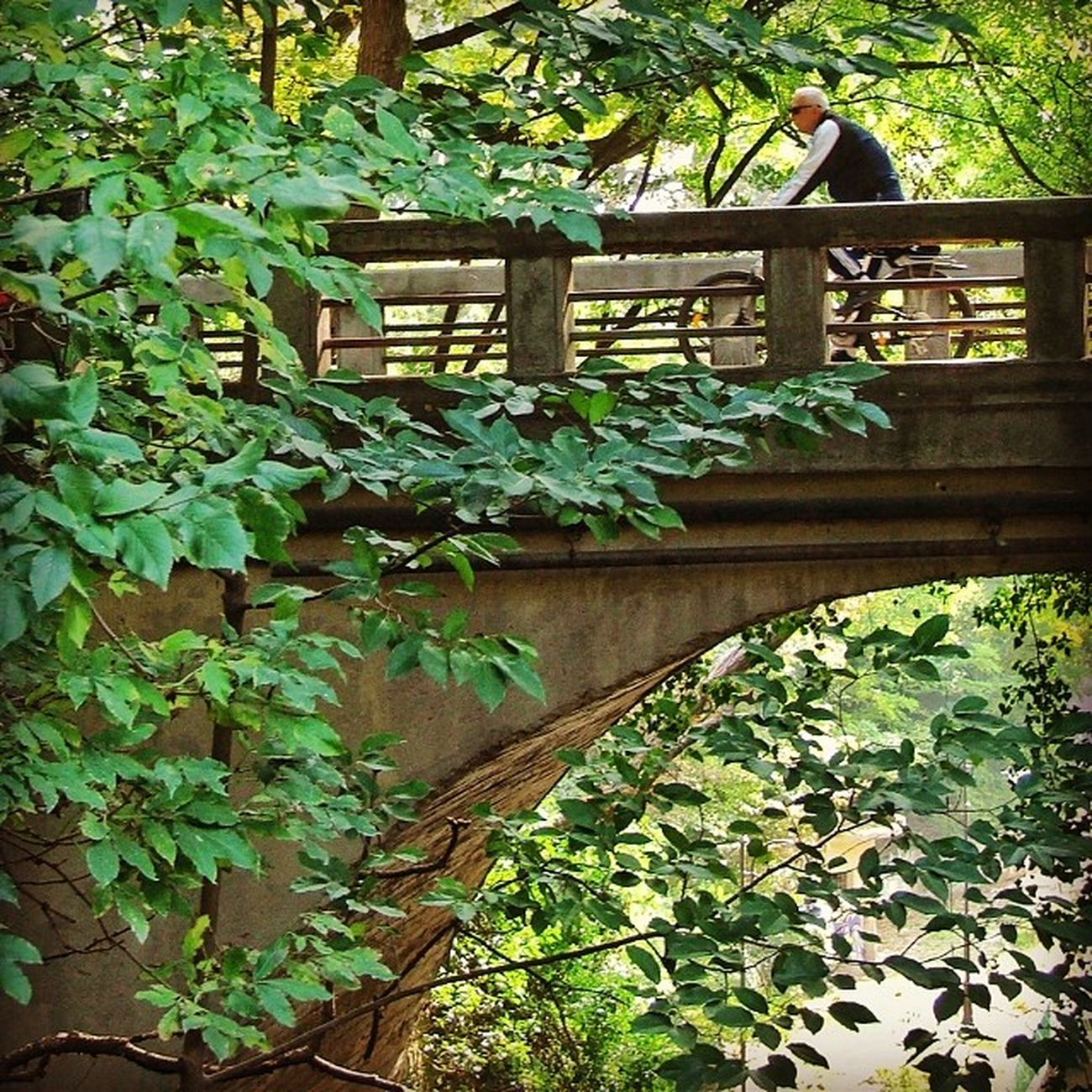 ? Varna Park Bridge Trees bicycle fujifinepix s5500