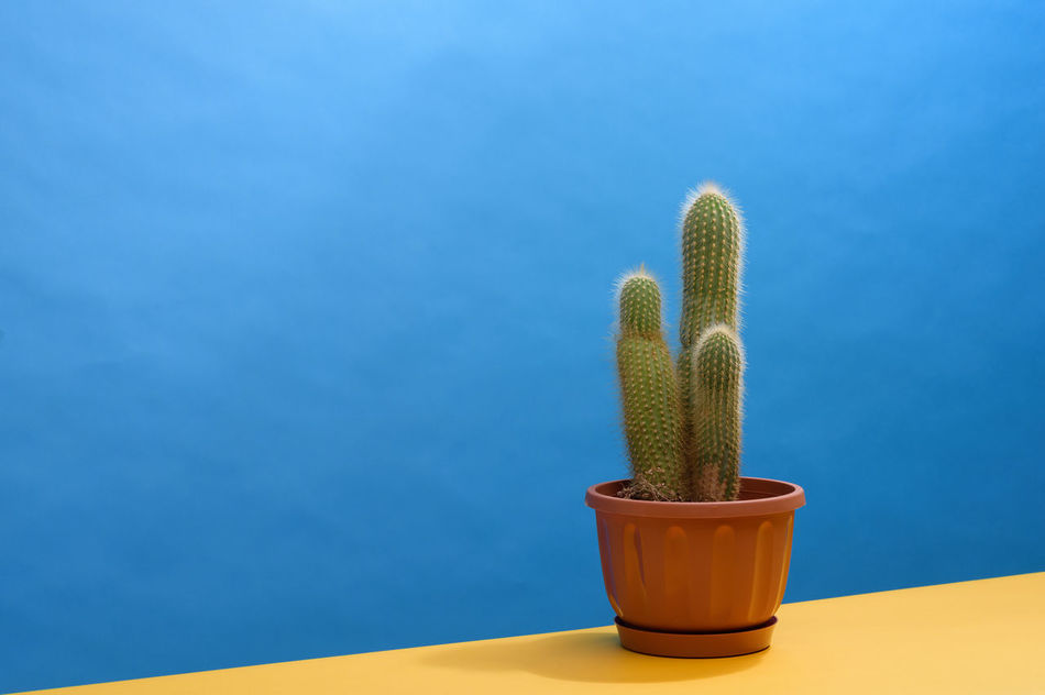 Beach Area Beach Blue Cactus Day Geometry Healthy Eating Heat - Temperature Houseplant No People Plant Yellow