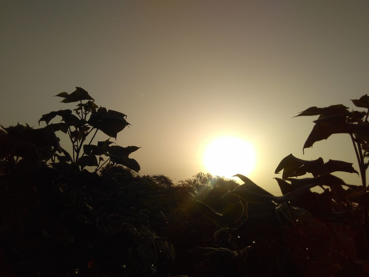 sun, sunset, lens flare, sunbeam, sunlight, nature, beauty in nature, outdoors, silhouette, sky, no people, clear sky, tranquil scene, tranquility, growth, leaf, low angle view, scenics, close-up, tree, day