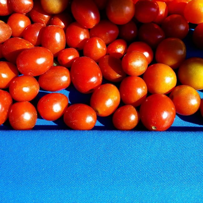 tomatoes in late summer on blue. Delicious Tomatoes Harvest Red Blue Food Farmers Market California Happiness EyeEm Food Lovers Organic Organic Food Bounty Summer Summer Harvest Cherry Tomatoes Farmstand Healthy Lifestyle Health Food Healthy Eating Vegetables Healthy Blue Wave TakeoverContrast