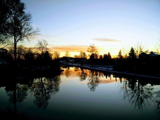 Water Tree Lake Silhouette Sky