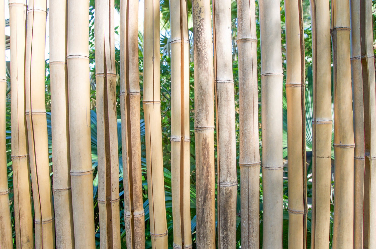 Bamboo fence with brown stalks Background Bamboo Bamboo - Plant Bamboo Grove Brown Closeup Day Fence Forest Full Frame Growth Lines Nature No People Outdoors Pattern Plant Repitition Rows Segments Stalk Stem Stick Tree Trunk Vertical Symmetry